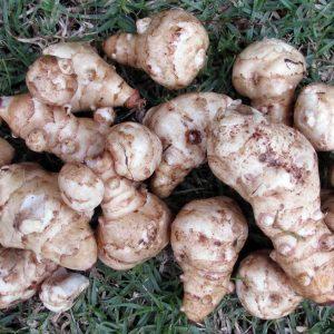 Artichoke Nutty Veg Flower
