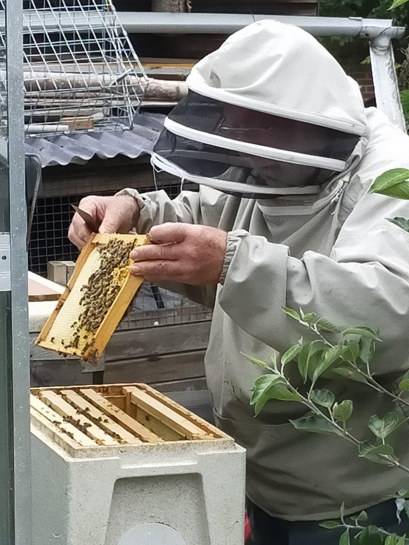 My Grandad harvesting honey in his garden.