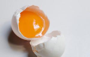 egg dandelion