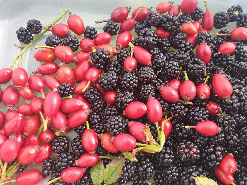 Rosehips and blackberries