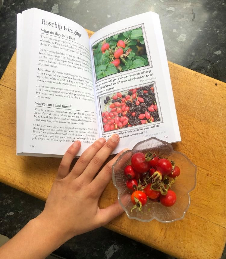 Rosehips and Rosehip foraging guide